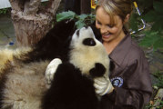 Sneezing Baby Panda