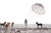 L'isola dei cani (2018)